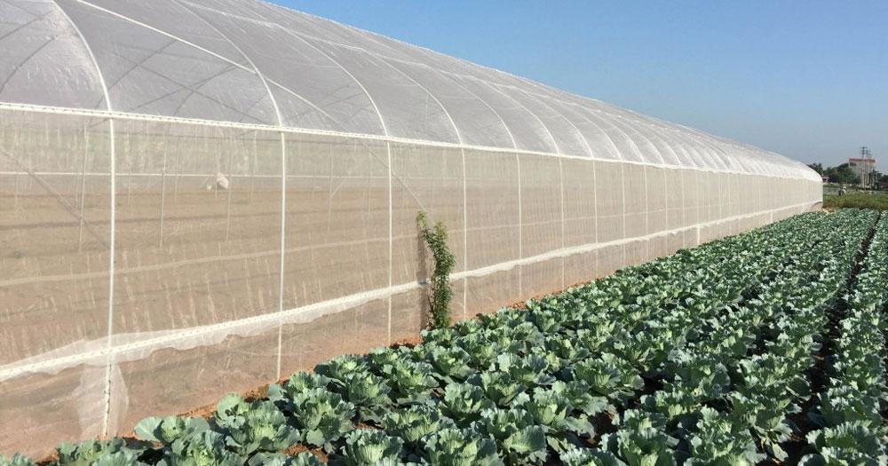 Mô hình nhà lưới trồng rau sạch là gì?