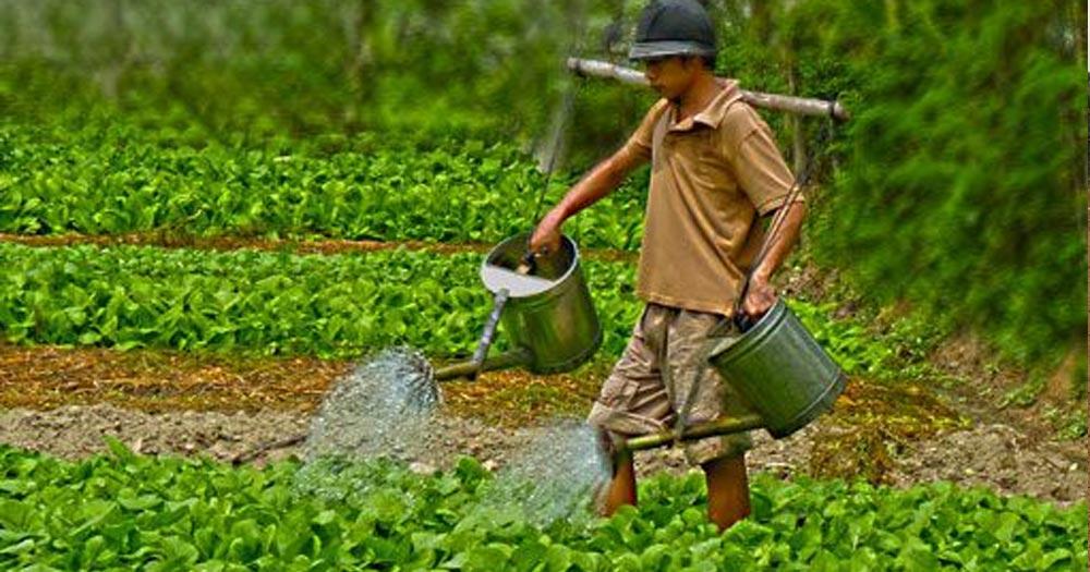 Đảm bảo cung cấp đủ nước và chất dinh dưỡng cho cây
